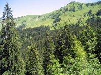 Tiefenbachalm: Bild #28