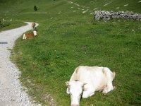 Bodenschneidhaus: Bild #24