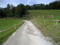 Lamsenjochhütte: Bild #30