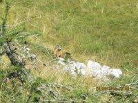 """Erlebnisbericht Dolomiten-Cross """"die große Acht"""": Marmolada nachholen (Tag 7): Bild #5"""