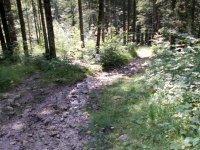 Erlebnisbericht Transalp: Gaissach - Zillertal - Breitlahner (Tag 1): Bild #2