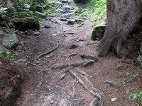 Erlebnisbericht Transalp: Savognin - Chiavenna (Tag 5): Bild #15