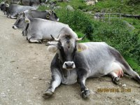 Erlebnisbericht Transalp: Meran - Ultental - Rabbijoch (Tag 4): Bild #2