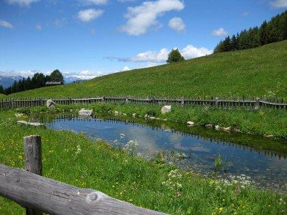 Schutzhütte Kreuzwiesenalm: Bild #7